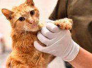 Enkazdan çıkarılan kediler tedavi altında