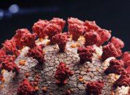 Mevsimsel alerji ve Covid-19 arasındaki farklar nelerdir?